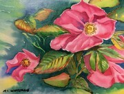 Wild Rose #2, 12 X 9 inches, watercolour