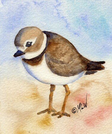 Semi-palmated Plover # 2